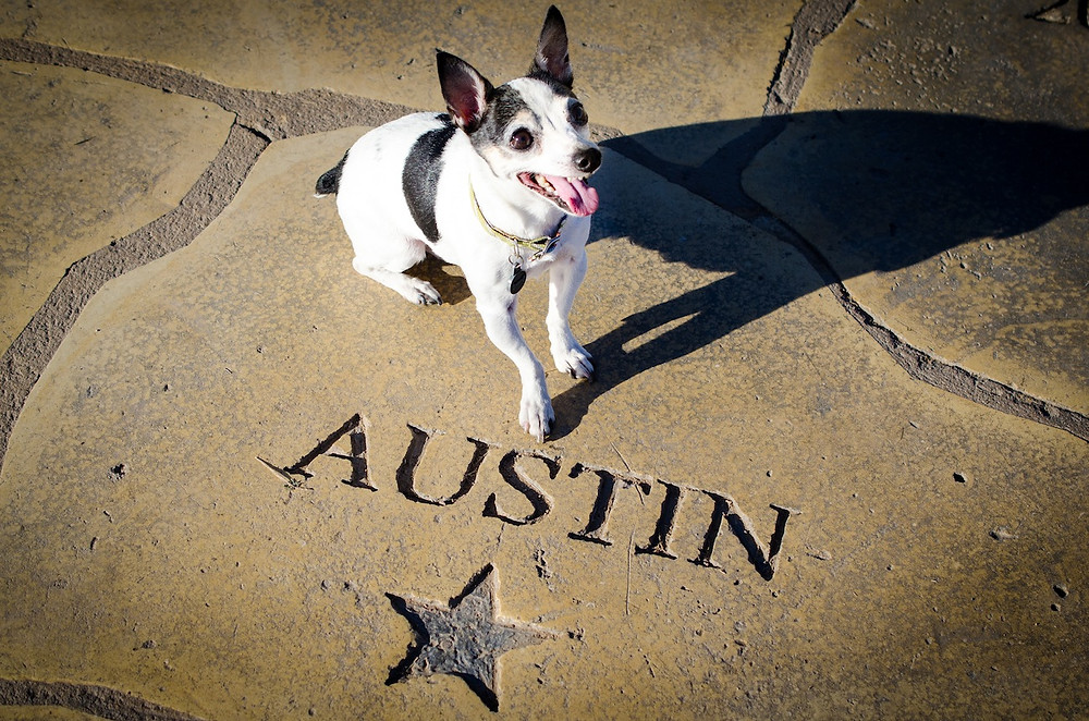 Dog photography in Austin, Texas.