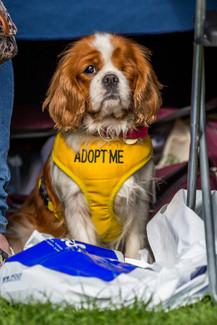 All Dogs Matter - Rescue Dog - London