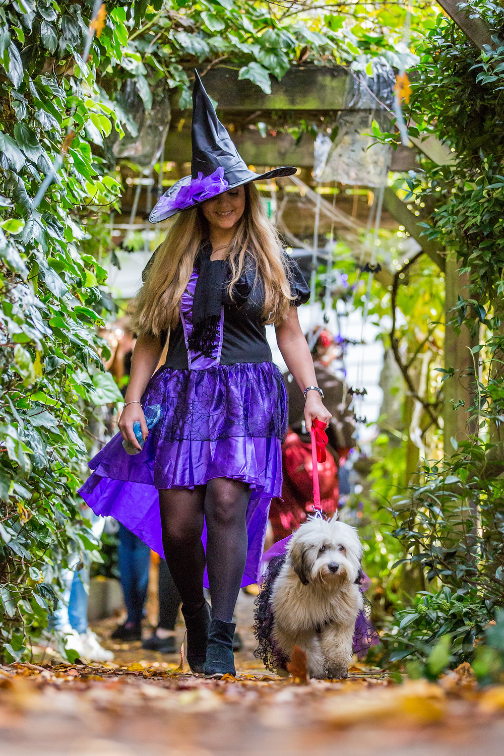 Dog photography in London. All Dogs Matter Halloween Charity Event. Not all witches have cats!