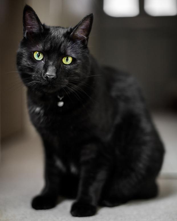 Tux - Cat - London