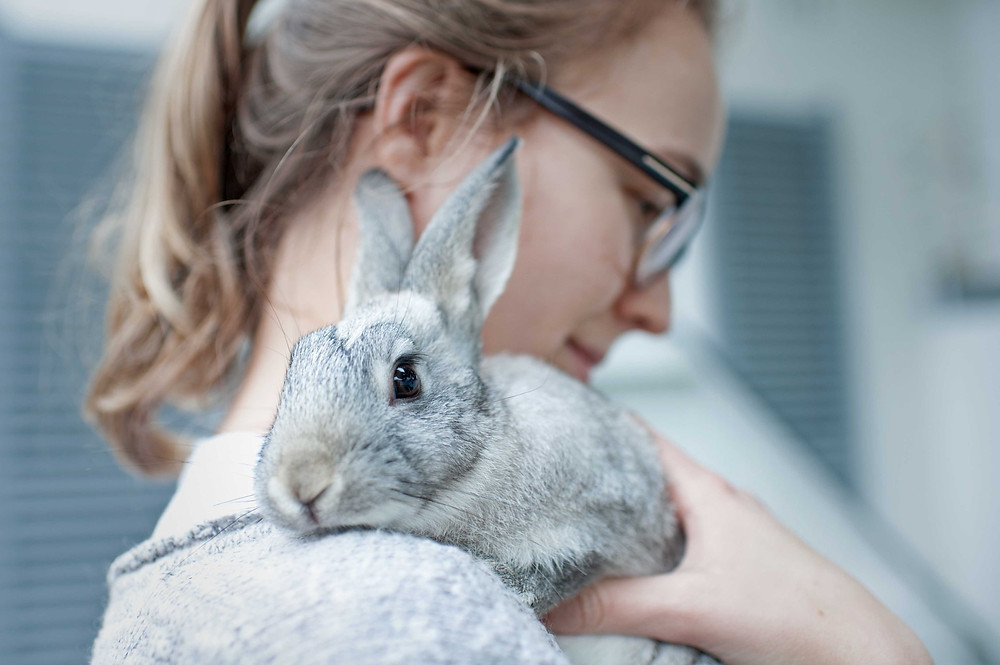 Pet photography in Cape Town. Rabbit with owner