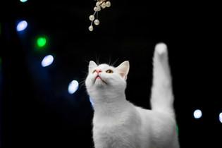 Cat - London