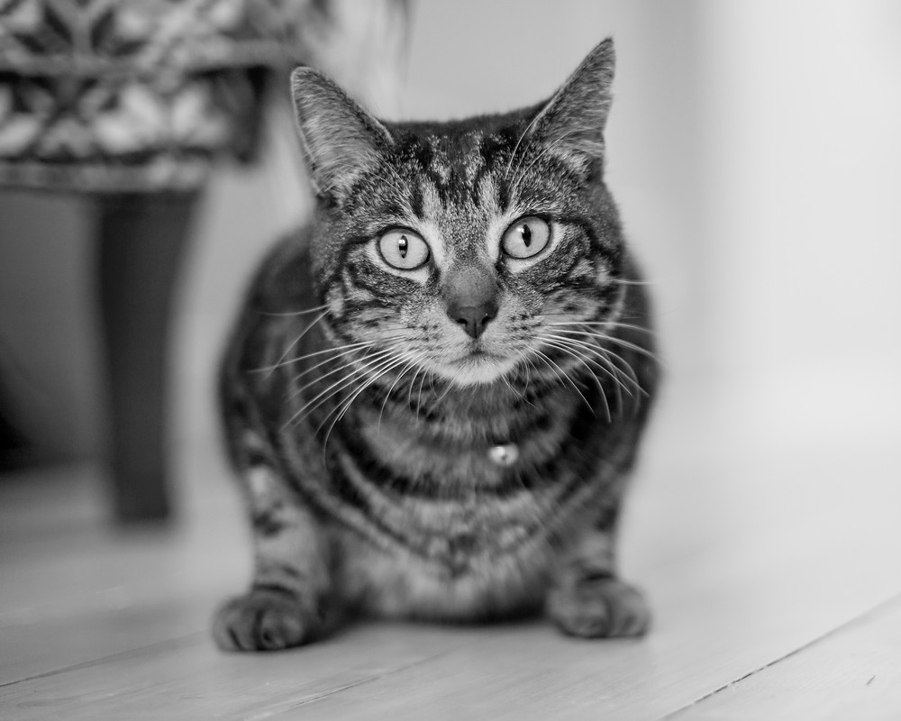 Cat photography in London. Alfie the cat