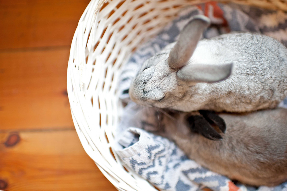 Pet photography in Cape Town. Rabbit from above