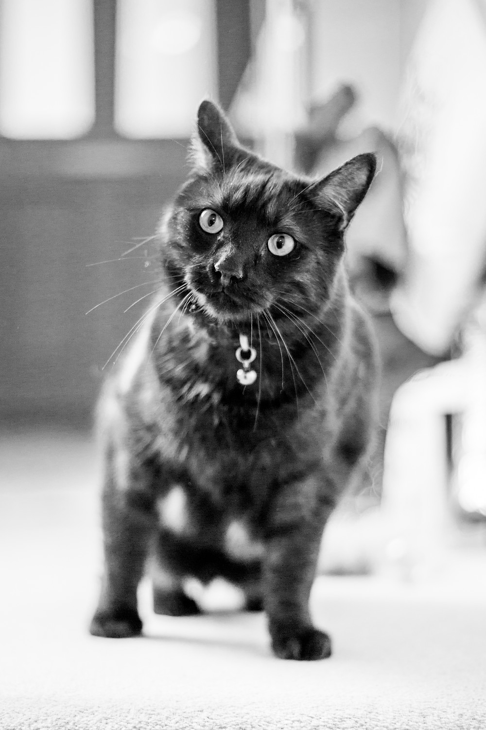 Cat photography in London. Parker and Tux. Cats at home.