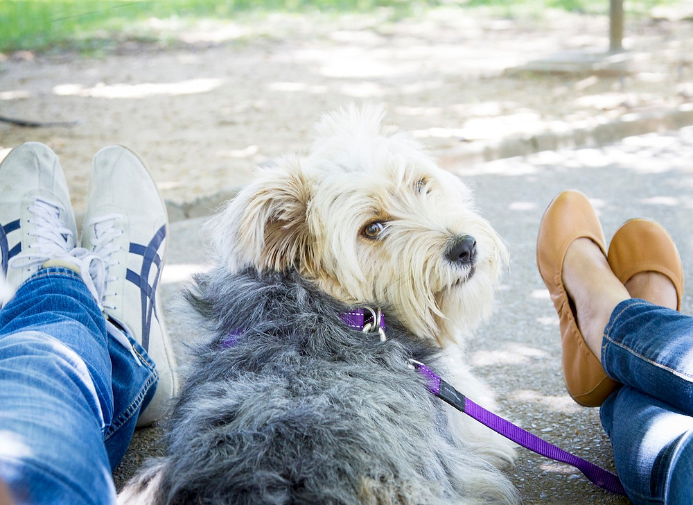 Dog photography in Cape Town. Laska the dog with his owners in De Waal Park.