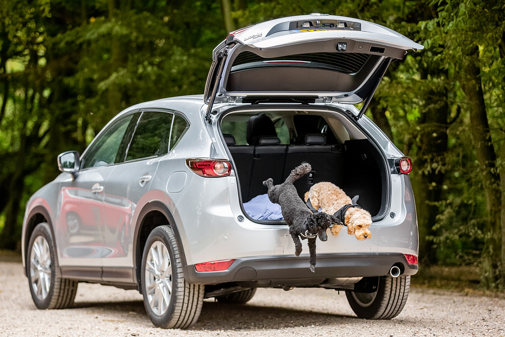 Dog photography in London.  Tilly and cockapoo marley Dogs jumping out of a car - Mazda CX-5. #dogsinboots