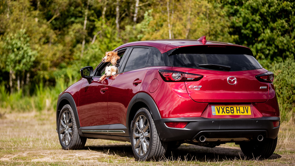 Dog photography in London.  Dogs looking out of a car window on Coombe Hill, Chiltern for Mazda CX-5. #dogsinboots