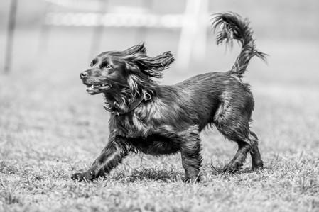 Rescue dog - London