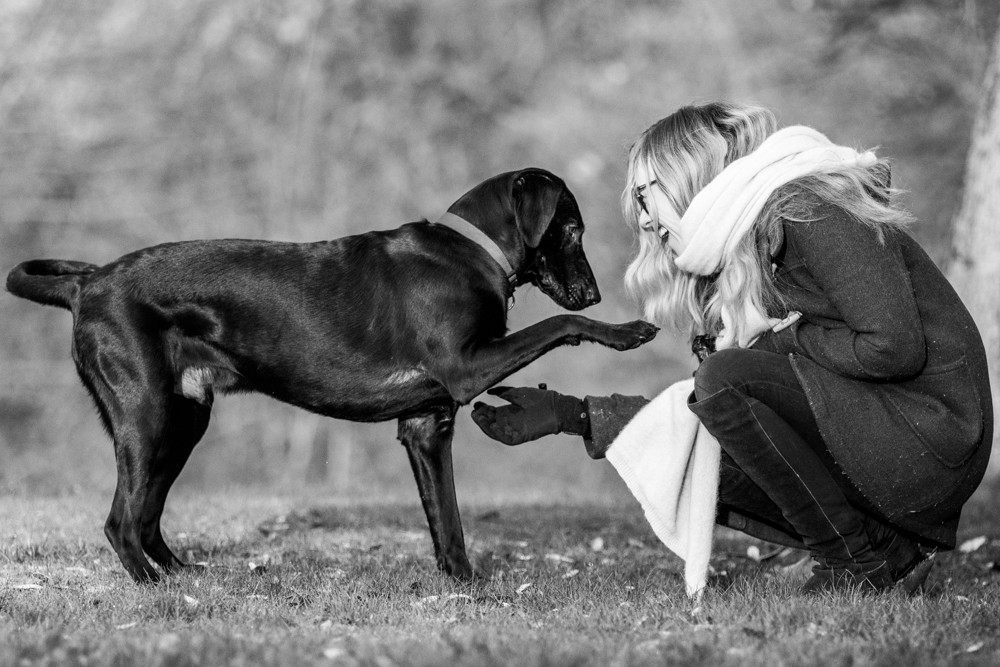 Dog Photography in London.  Bugsy playing with his owner in Greenwich Park London