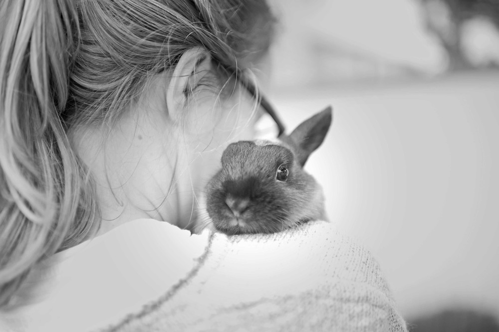 Pet photography in Cape Town. Rabbit on shoulder