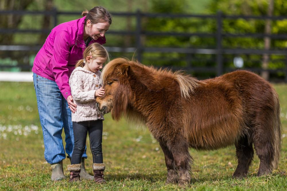 stroking a pony