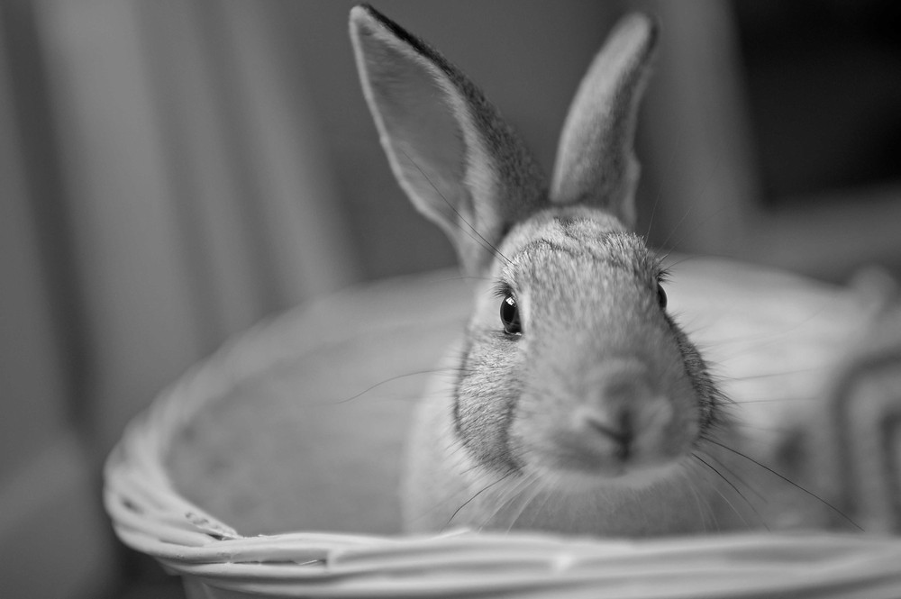 Pet photography in Cape Town. Rabbit.