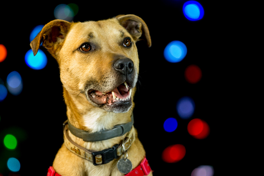 Recue animal photography in London. A dog at Christmas for the Wood Green Animal rehousing charity
