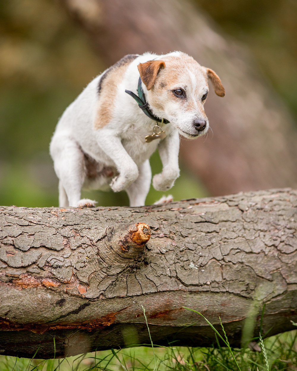 Dog photography in London. Yorshire Terrier - Bertie