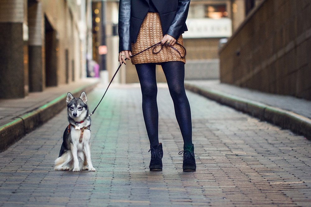 New York Pet Photography by Natalie Siebers