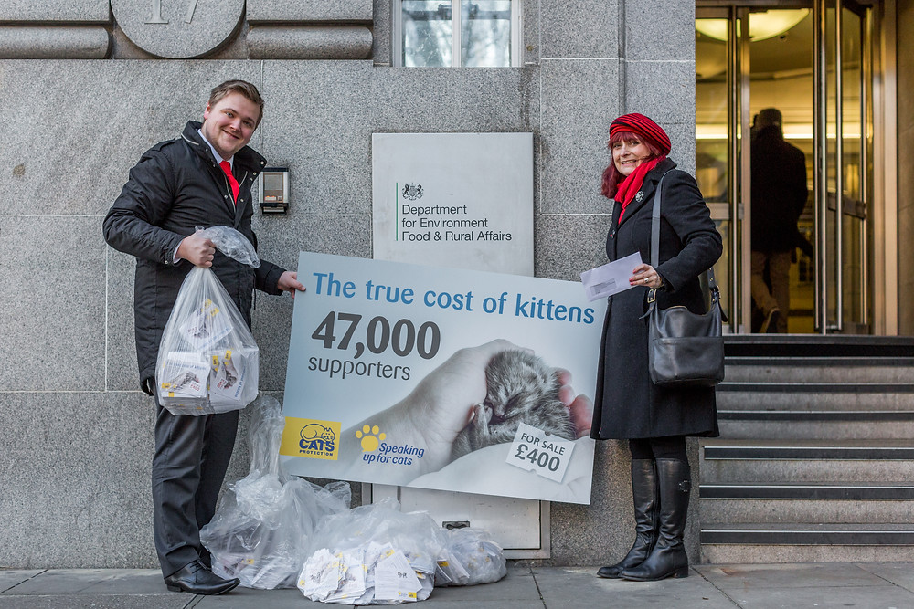 Charity photography in London. The true cost of kittens