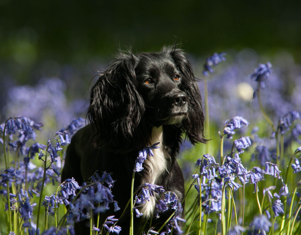 Pet photographer in Bedfordshire. Natasha Balletta