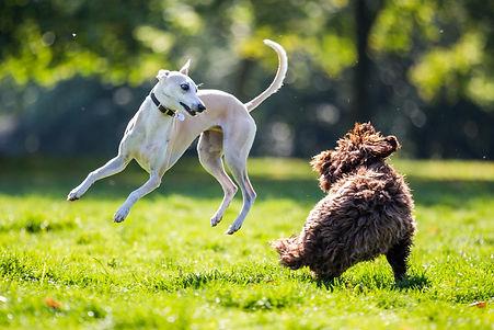 All_Dogs_Matter_-_Victoria_Park-69.jpg