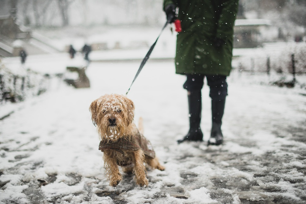 Dog photography in New York. A cold winter scene for this New York dog.