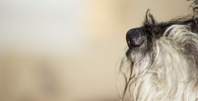Dog photography in London. A dogs nose.