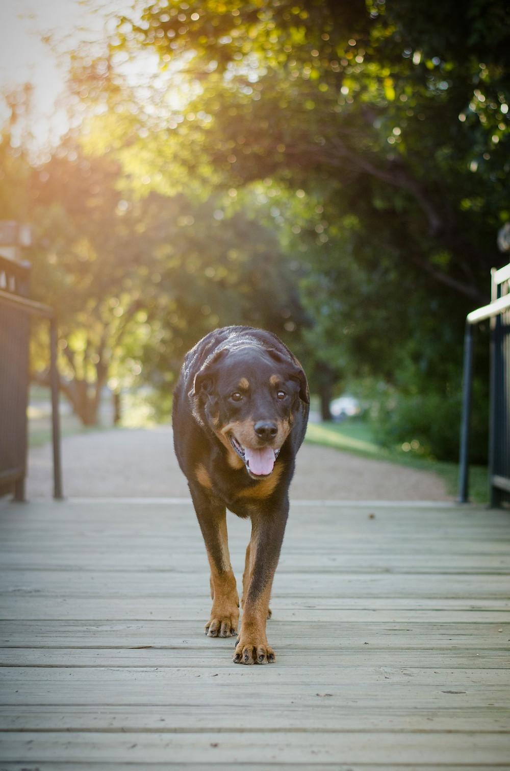 Dog photography in Austin, Texas.