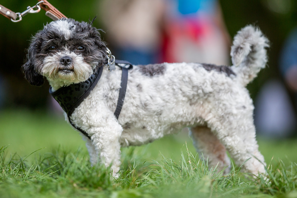 Pet photography London - The Great Hampstead Bark Off 2017