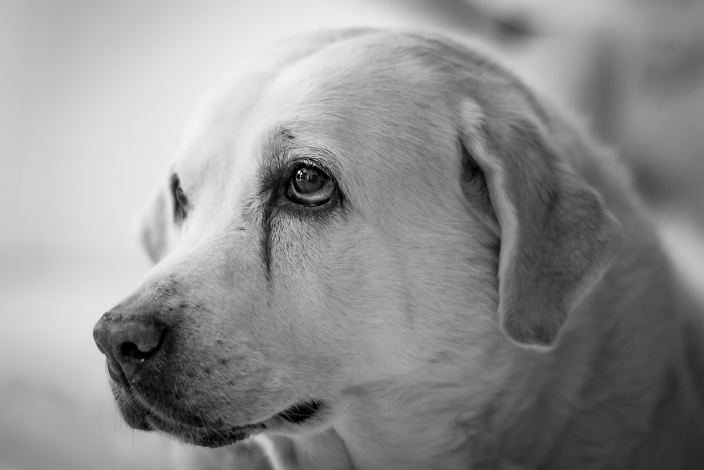 Rescue Dog photography in Cape Town. TEARS animal charity.