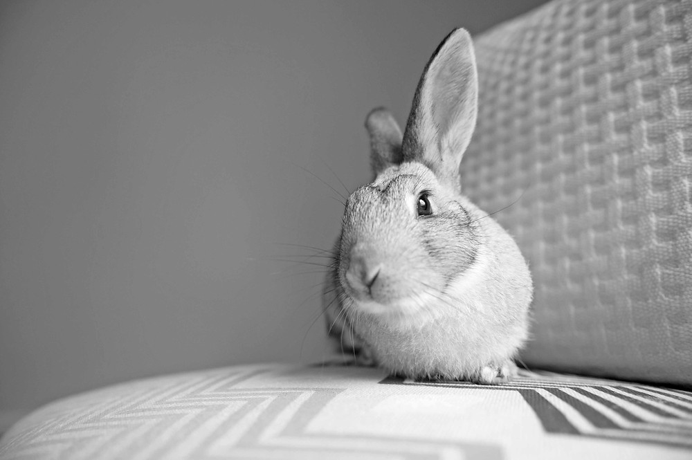 Pet photography in Cape Town. Rabbit