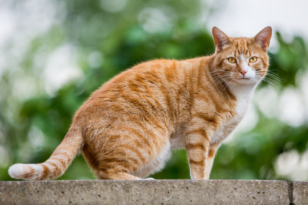 Cat photography in London. Gingy.