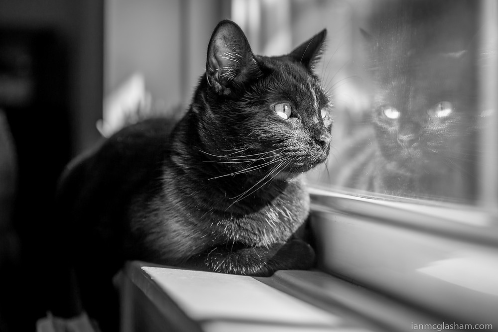 Cat photography in London. Nubia the cat watching the world go by.