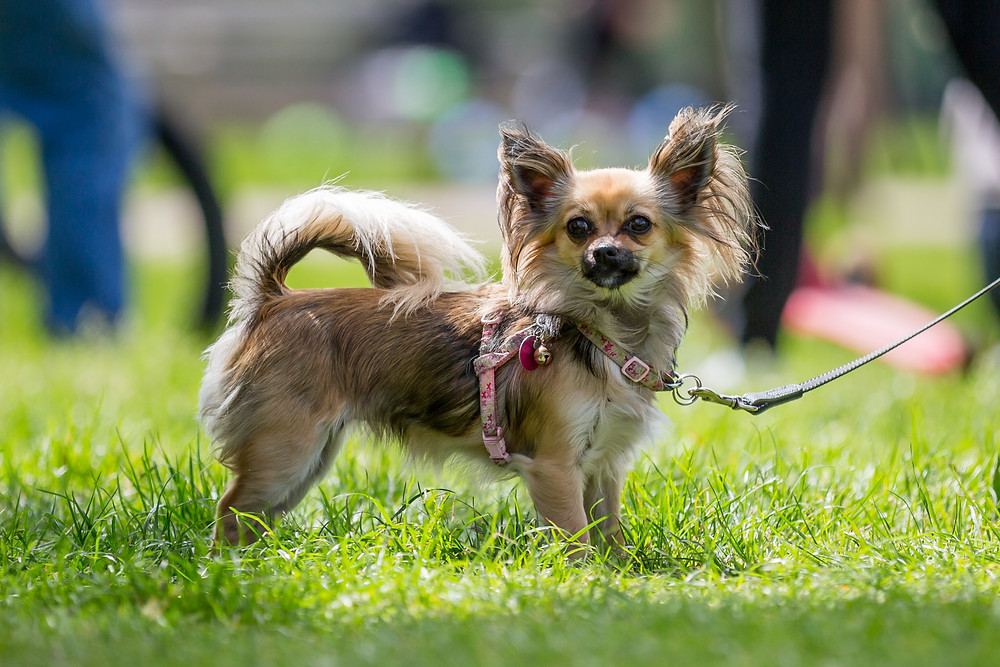 Dog photography London. Dog on Primrose Hill at The Great Hampstead Bark Off for the charity All Dogs Matter