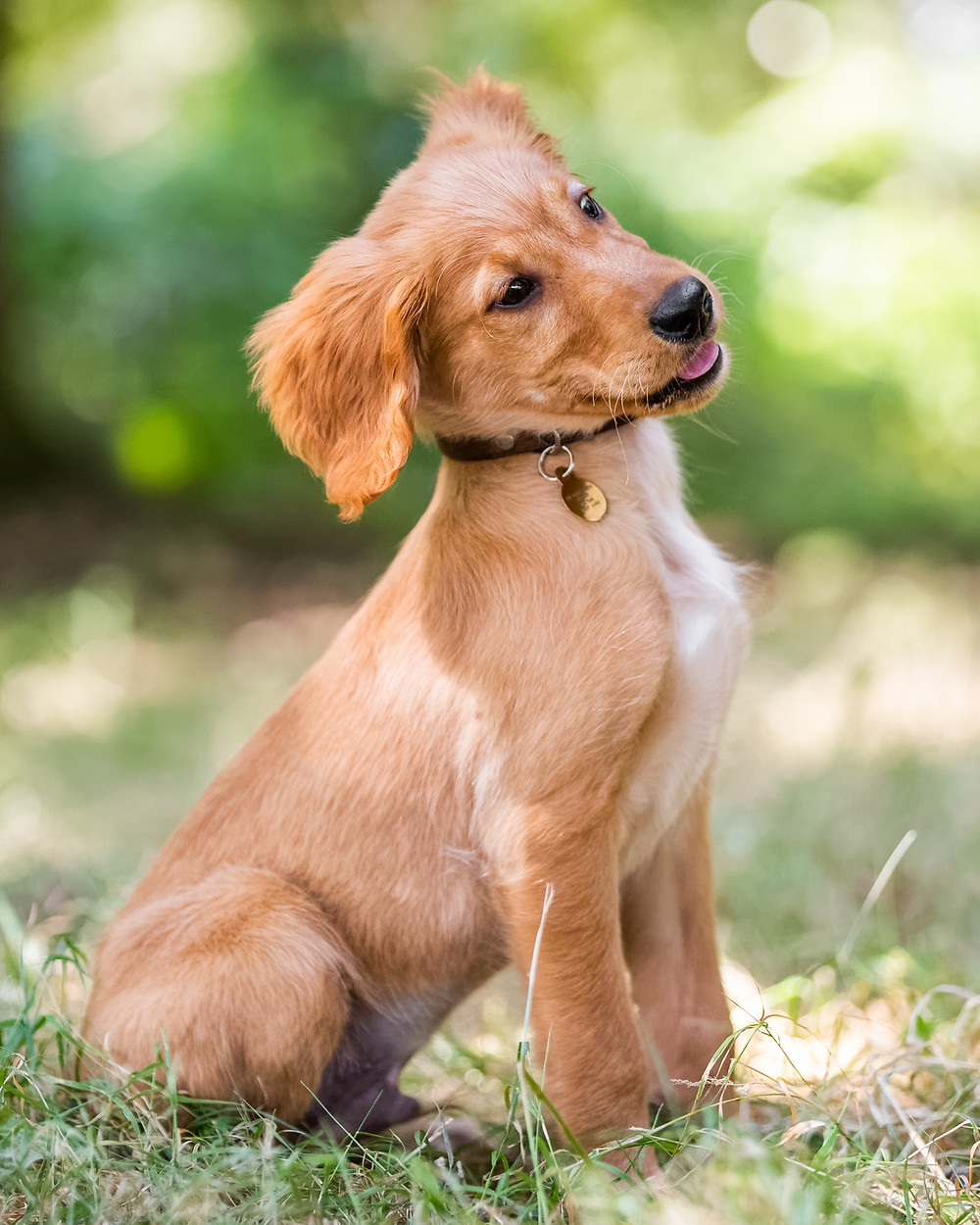 Pet Photography in London, puppy posing for a portrait in Regents Park, London