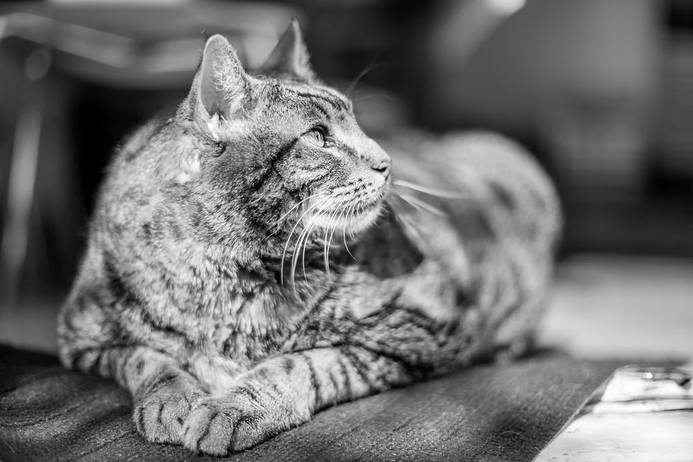 Cat photography in London. Bernard.
