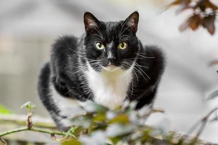 Blarney - Cat - London