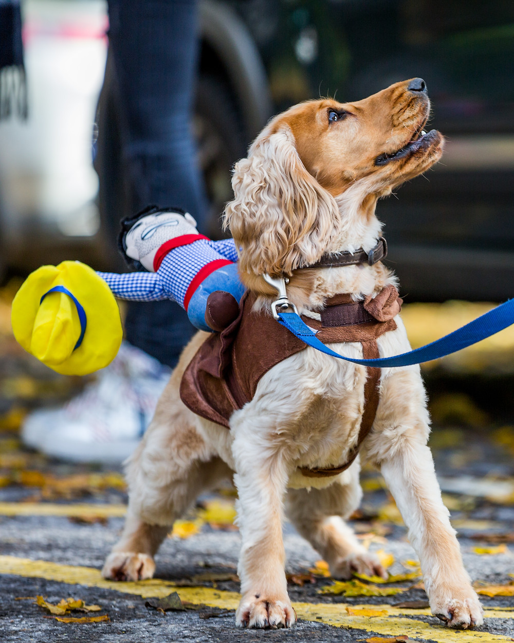 Dog photography in London. All Dogs Matter Halloween Charity Event. Dog dressed for the competition