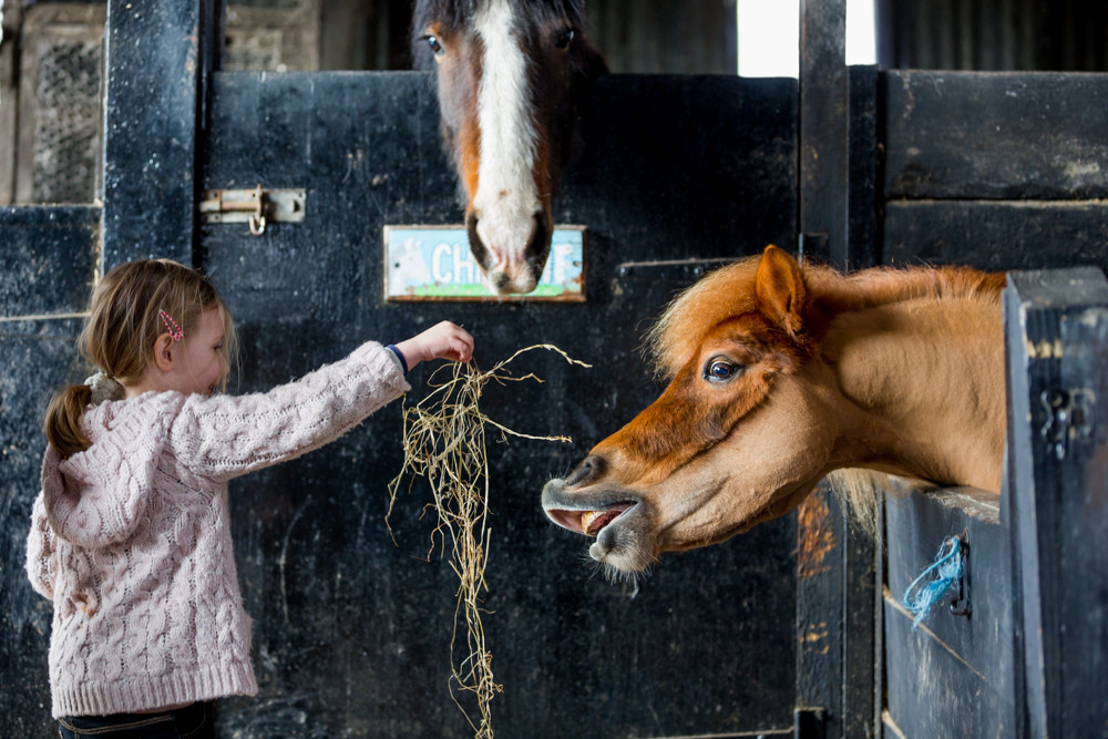Feeding hay to horses in a stable