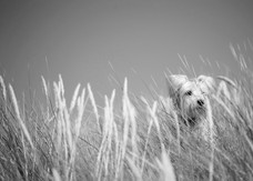 Dog photography in Oxford
