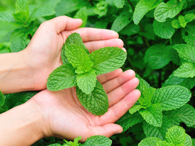 For the love of Mint!