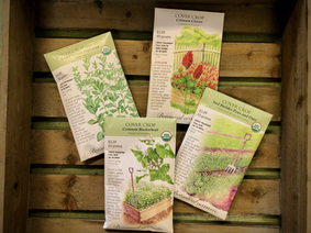 What is a Cover Crop?  Why should you plant one this fall in your garden?