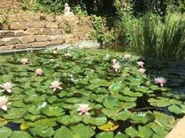 Pond BacktoLaTierra.jpg