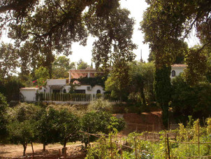 View of the finca from the garden