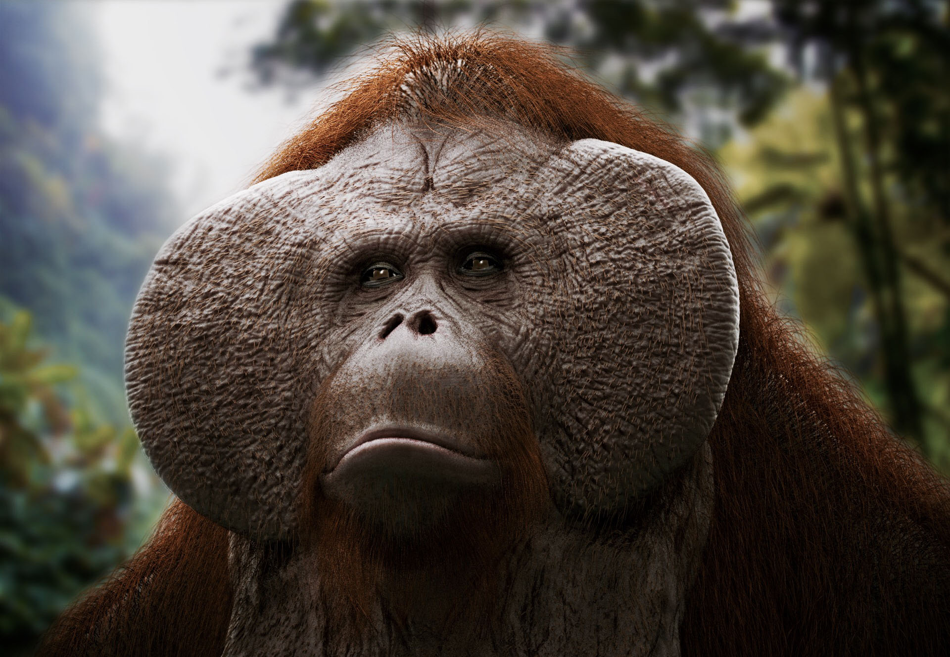 Orangutan (2 days project)