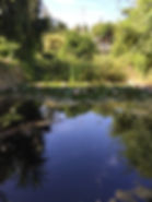 pond Back to La Tierra.jpg