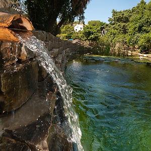 swimming pond natural pool.jpg