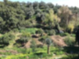 Overview garden LT.JPG