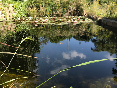 a clear chemical-free pond?