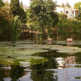 Back to la tierra apartment pond with li