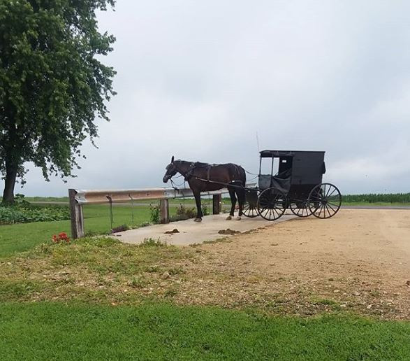 Cashton Amish Farms