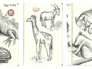 Memphis Zoo Sketches